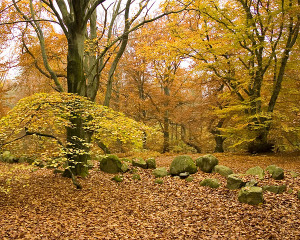Prästaskogen höstbild